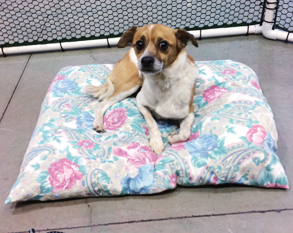 When a dog goes to a home the bed made by the PebbleCreek Quilters goes with him/her.