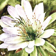 """""""Cactus Delight"""" by Hilary Fiscus, watercolor entry"""