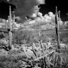 An intriguing example of a familiar desert scene utilizing infrared photography by Roger Bunting, featured presenter for the April Camera Club meeting.