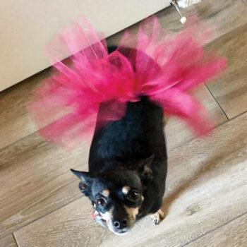 Peanut dressed as a ballerina.